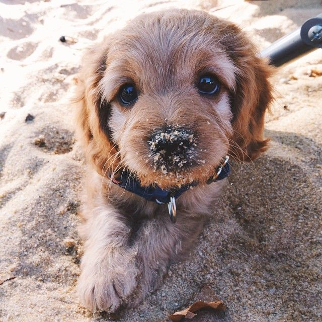 Cooper's first time at the beach