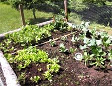 NL Interactive - Features : Lasagna Gardening in Newfoundland and Labrador