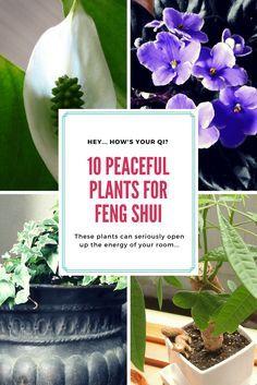 Best Plants for Feng Shui