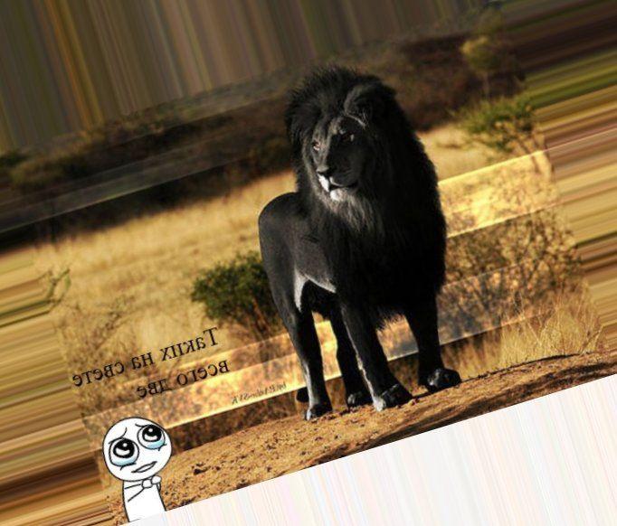 Черный лев. Пожаловаться