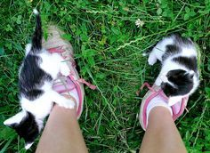 Kitty Shoes #Funny#Cute#Cats#Adorable#Animals