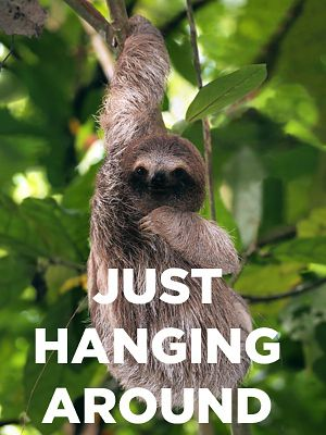 You got: The Sloth You're as cool as a cucumber, and you love to go with the flow. Your favorite activiti...
