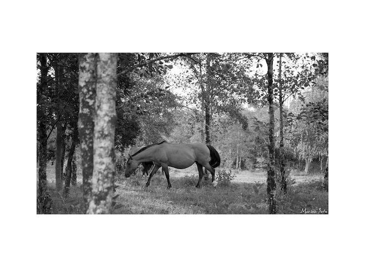 Horses Ralún.