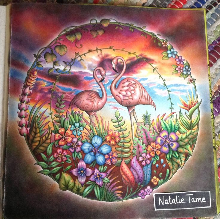 Natalie Tame With A Page From Johanna Basfords Magical Jungle