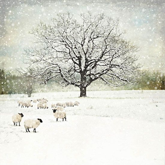 Winter Oak - christmas card design by Jane Crowther, Bug Art