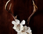 Here's what we can do to dress up Dallas' deer hhorns♥♥♥