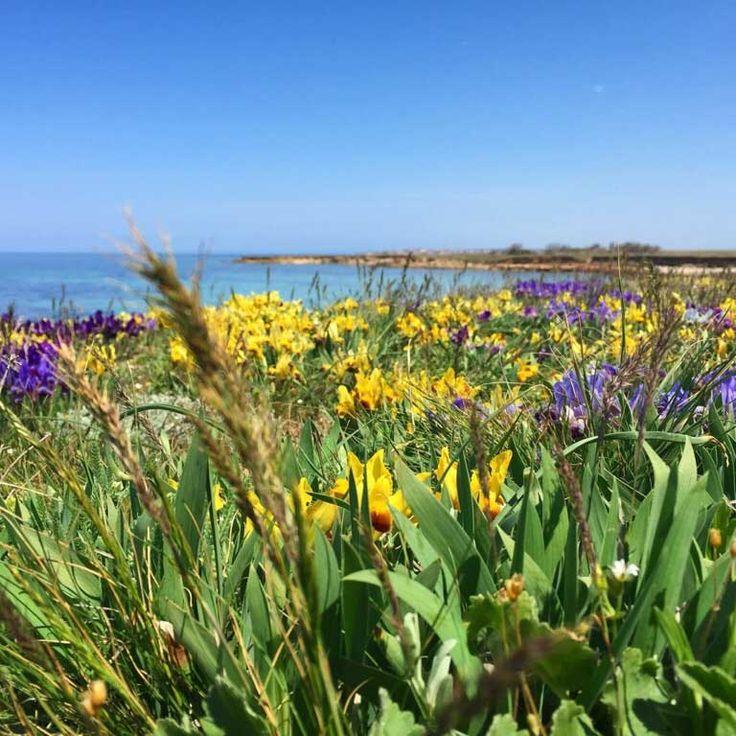 Весенние степные цветы, неподалёку от Черноморска