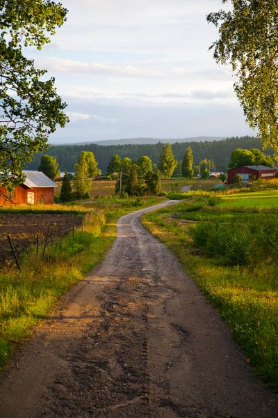 'A country lane on a summers evening in Varmland, Sweden.'