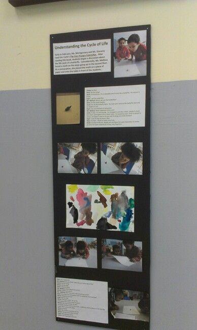 Reggio documentation on finding a moth