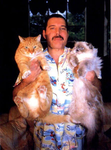 Freddie Mercury together with his cats.