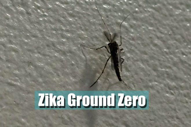 Zika Fever Has Arrived (Pedcast) | Portable Practical Pediatrics