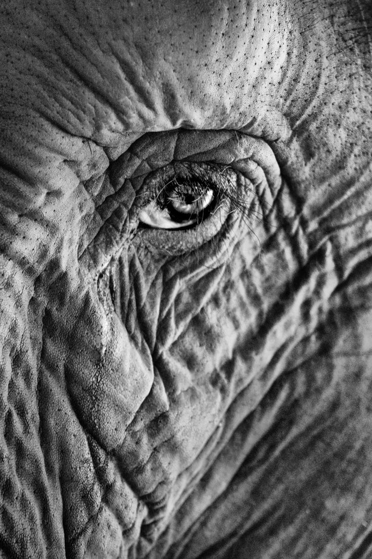 "Oil of Olay perhaps! ""No one ever thought about the Elephant's eye or got close to it …. but once I did I felt I could see a life-journey from his eyes!"" © Sarah Hosney"