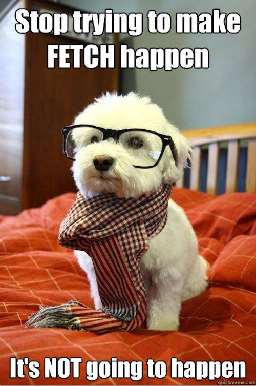 So fetchCutest Dogs, So Cute, Dogs Memes, Hipster Dogs, Pets, Hipster Puppies, Funny, Cute Dogs, Animal