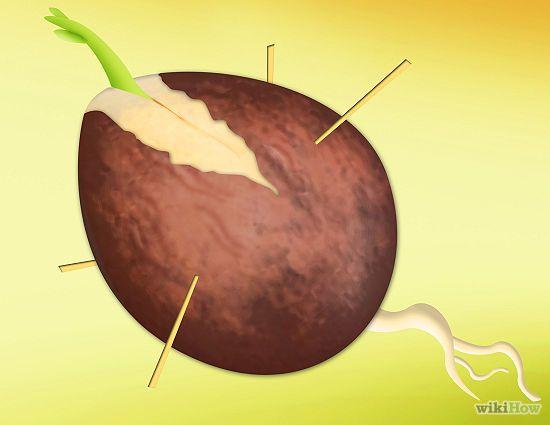 Como Plantar um Pé de Abacate - wikiHow
