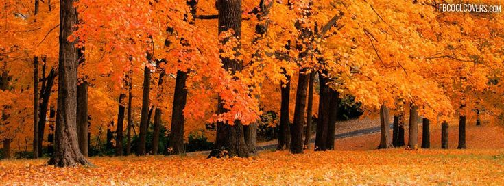 Autumn facebook covers for the timeline profile. #nature #fall #winter #LastMinute