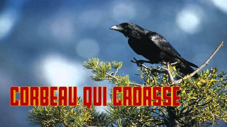 CORBEAU qui CROASSE Chant du corbeau raven sounds - cri du corbeau - rab...