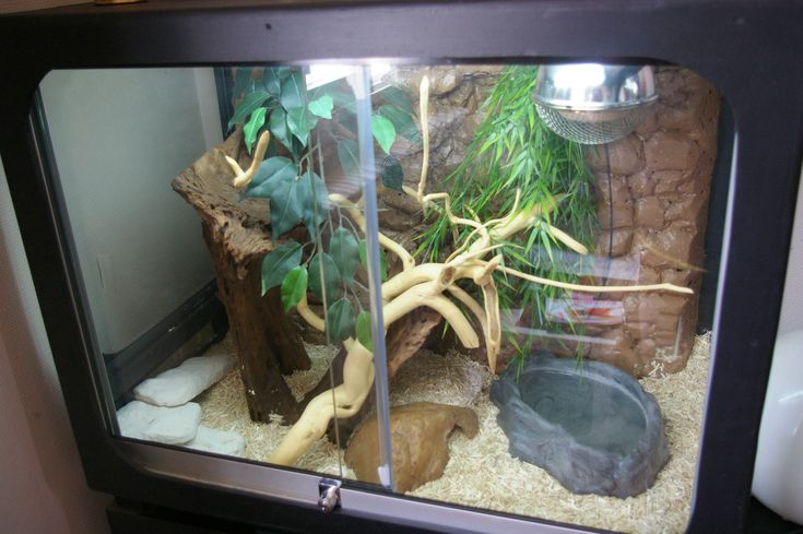 Corn Snake Homemade House Vivarium Terrarium Or What