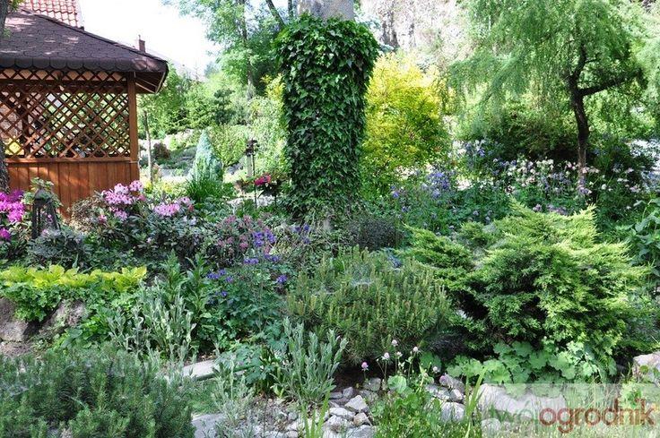 Cienisty fragment przy altanie, świetne miejsce dla rododendronów, ciemierników, host i tawułek