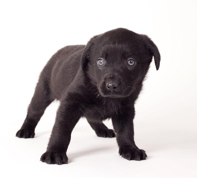 Dog Adoption Events Sf