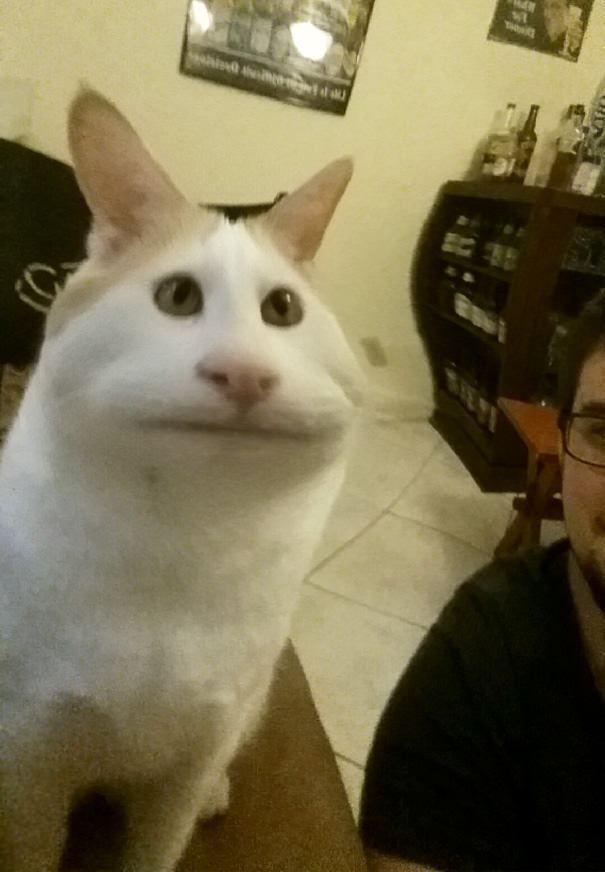 filtros-snapchat-mascotas-animales-6