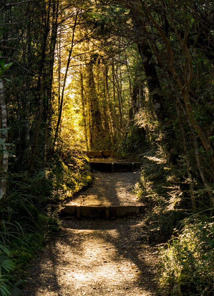 Ich bin ja echt kein Frühaufsteher, aber hier kann ich an einer Hand abzählen, wie oft ich ausgeschlafen haben. 😴 Das Licht ist einfach morgens unschlagbar! Morgen geht es wieder ganz früh raus für eine der schönsten Tageswanderungen Neuseelands: Das Tongariro Alpine Crossing. 🏃🏼♀️🏔 Ich freue mich jetzt schon aufs Füße hochlegen nach 8 Stunden laufen. 😵