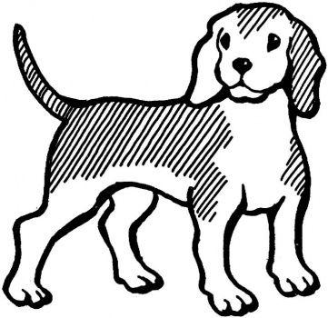 dog color pages printable Beagle
