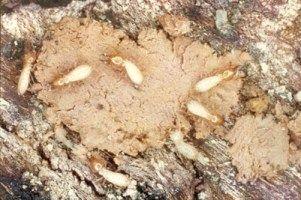 Termite Treatment Termite Treatment Vegetable Garden
