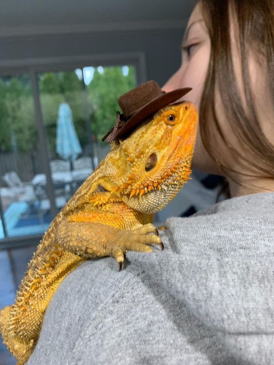 Pin by Cats Therapy on Amazing Animals | Dragon names