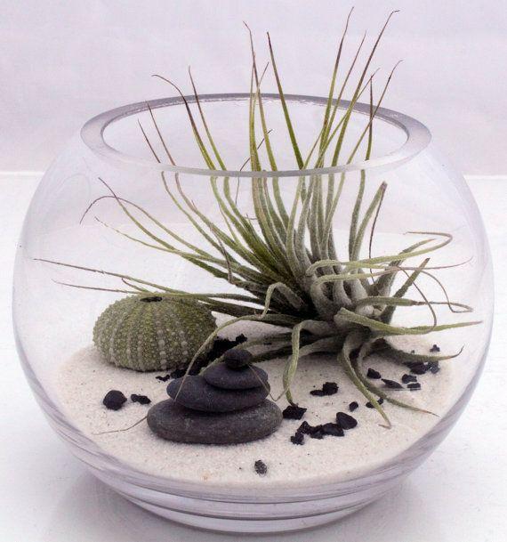 Small desktop zen garden terrarium kit with live Tillandsia fushsii air plant, white sand, sea urchin and stone stack- round fish bowl style. $44,00, via Etsy.