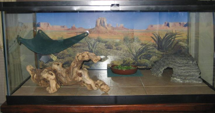 bearded dragon tanks | Bearded Dragon . org • View topic - 40 gallon breeders (show me pics ...