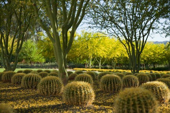 17 Mejores Im Genes Sobre Jardines Botanicos En Pinterest Plantas Y Jard N Arizona Y M Naco