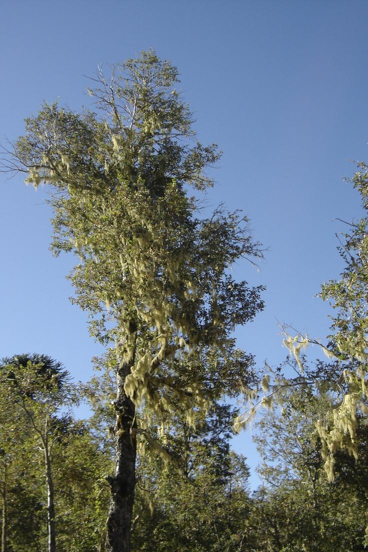 Fotos del bosque.