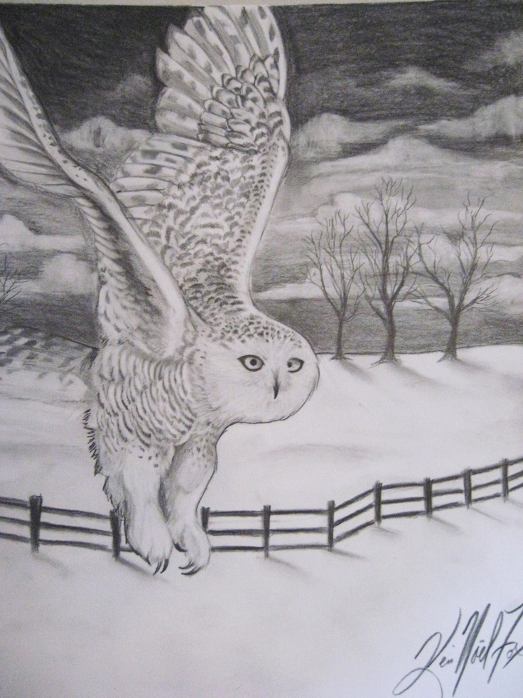 Pencil Drawing Of A Snowy Owl 14 Quot X17 Quot Owl Pinterest