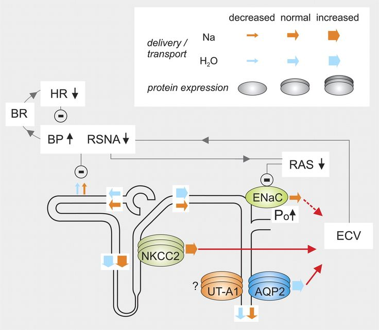 protein synthesis and importance of essential amino acids as well as energy sources Not only does this metabolic process generate energy, but it also  pathways  involved in the synthesis of non-essential amino acids  while ornithine is not  one of the 20 amino acids used in protein synthesis, it plays a significant role as  the  glutaminase activity is present in many other tissues as well,.
