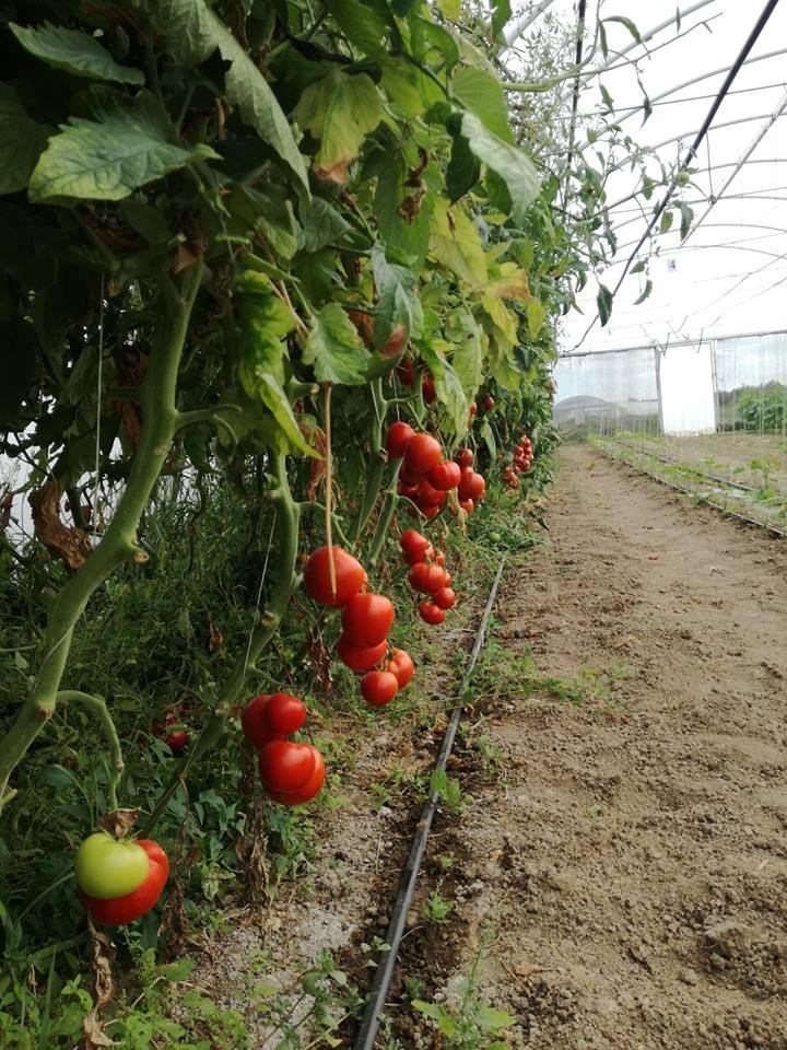 http://platferma.ro/heritage-farms-familiile-de-fermieri/