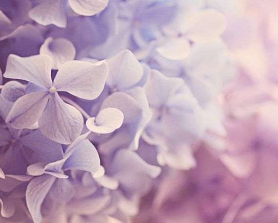 floral photography purple wall art hydrangea by TheGinghamOwl