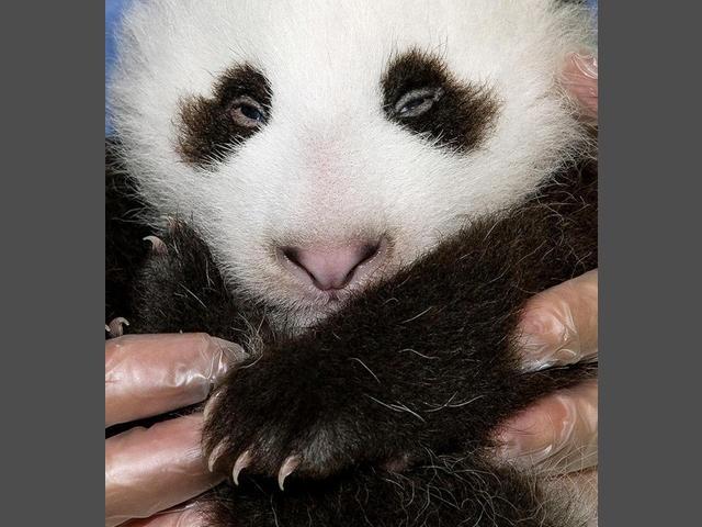 san diego zoo open july 4th