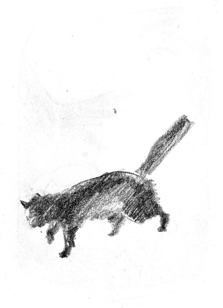 #cat #cats #sketch #scetching #scketches #sketchdrawing #drawing #pencil