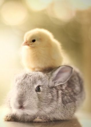 my animal tendencies all started with a chick and a bunny. Way to go Mom and Dad.   xoxo Kris