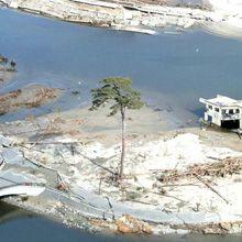A limpeza continua após dois anos o tsunami ter atingido o Japão no dia 11 de março de 2011. Uma árvore de uma floresta ficou de pé em Rikuzentakata, Iwate.