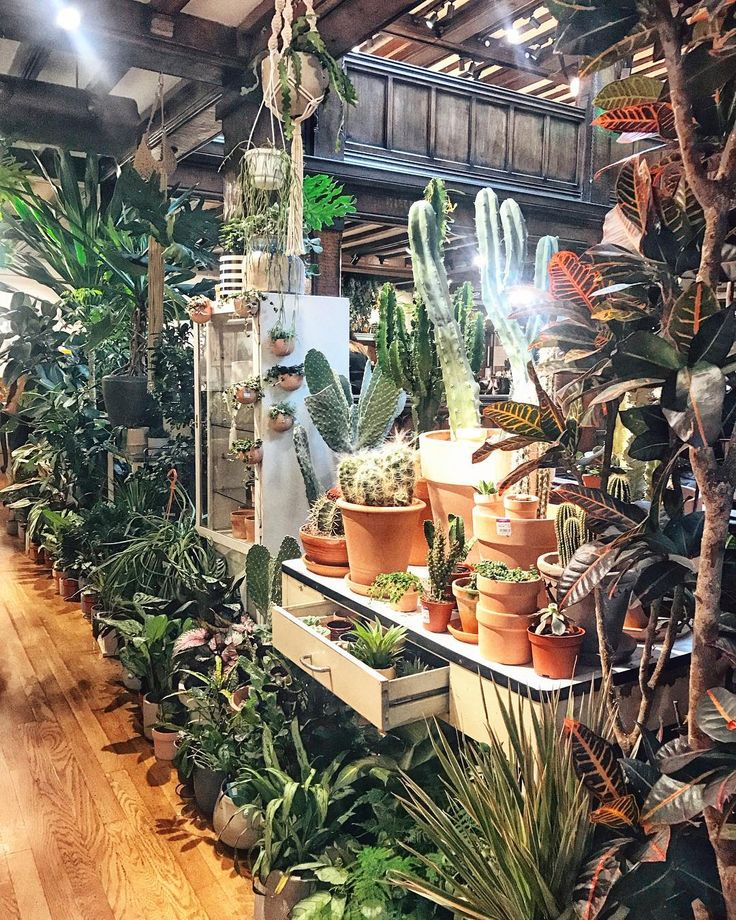 @conservatory_archives #plants #cactus #succulents #greencorner #libertyoflondon @libertylondon #store #iconic #london #favouriteshop #shop #liberty #regentstreet