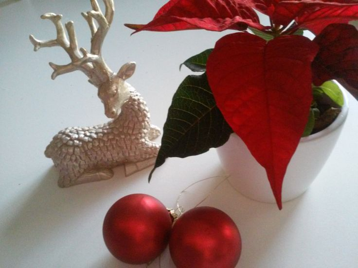Easy Christmas decoration - stylish red and gold - always go together