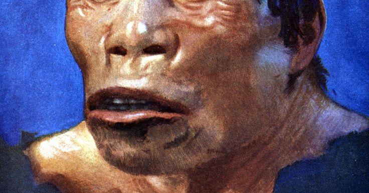 Actividades del hombre del Paleolítico. El Paleolítico inicia desde aproximadamente 50000 años, hasta hace 6000 años antes de la época cristiana. El paleolítico inferior, medio y superior son subdivisiones del periodo. La Edad de Piedra es otro nombre que se otorga a esta era. Cavernícola es la denominación común para la gente de este tiempo. Una descripción usual del hombre del ...