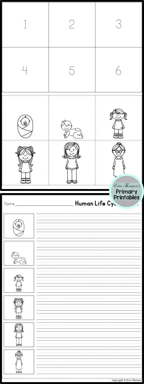 FREE Human Life Cycle Sequencing ~ Boy and Girl Versions Included!