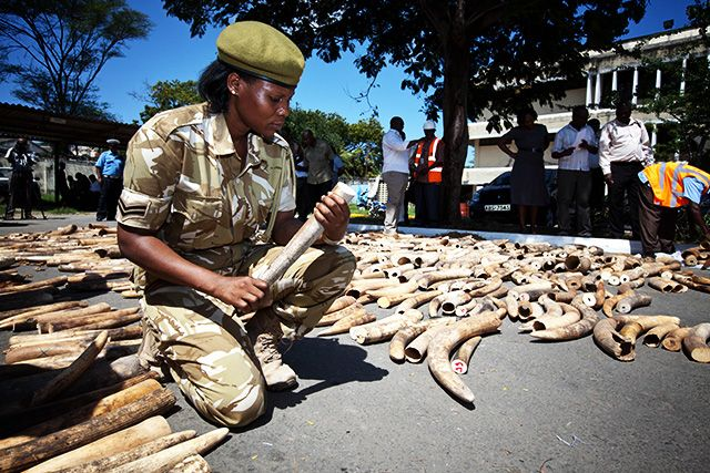How Poachers Tried to Smuggle Tons of Elephant Ivory and Pangolin Scales Out of Africa