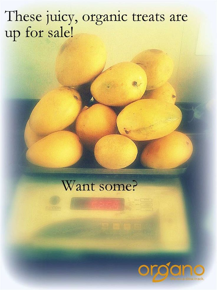 #juicy #mouthwatering #Mangoes #forsale at #Naandi.