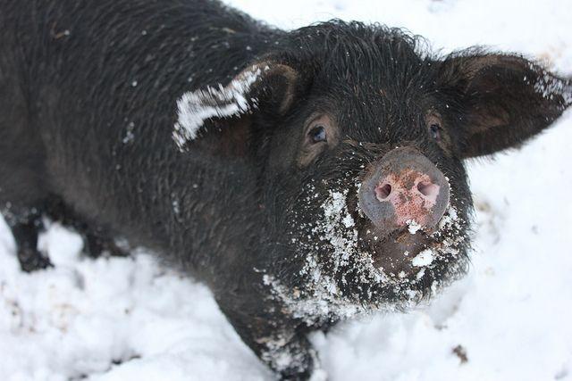 animals made of snow - photo #32
