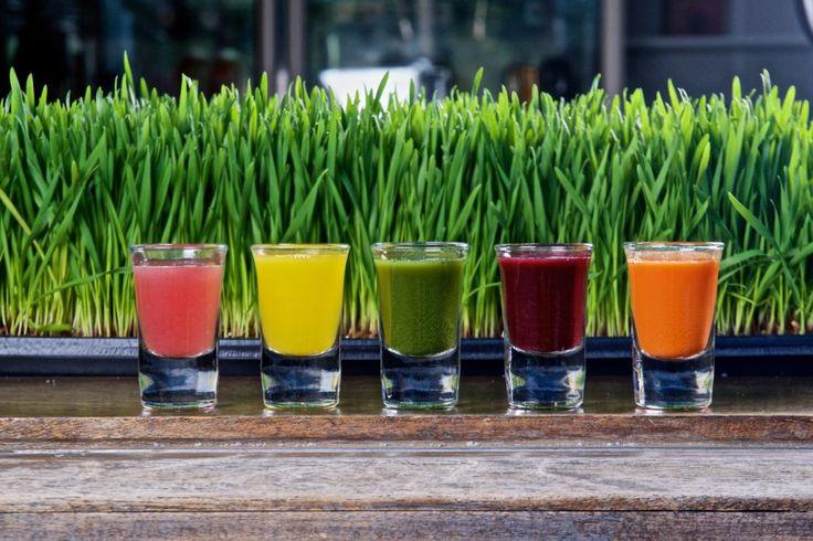 Recept på juice shots som lindrar och förhindrar förkylning med ingefära, citron, vetegräs, fiskleverolja, blåbär, äppelcidervinäger