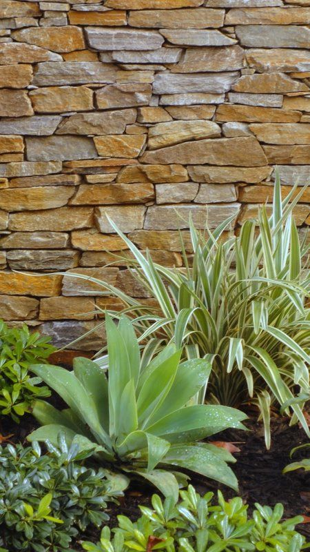 Textured planting with feature #stonewall