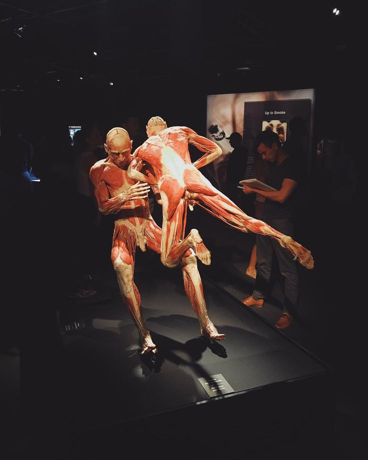 Explored an interesting & creative way to educate people on the human body at the @californiasciencecenter's Body Works Pulse exhibit.  #bodyworlds #pulse
